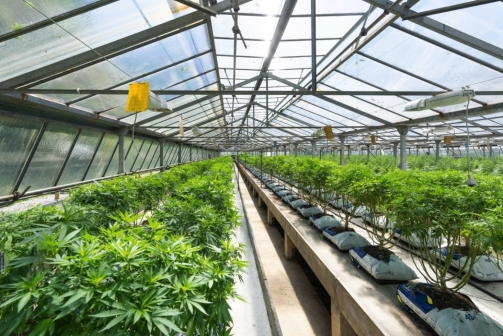 How KeefX is Fueling the Growth Of The B2B Cannabis Industry