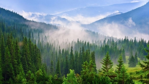 We must look to European entrepreneurs for the global future of forests
